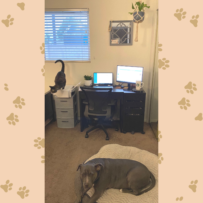 home office remote work wfh laptop with cat on printer and dog bed furry coworkers